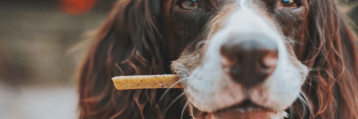 Hund, der holder naturlige hundesnacks i sin mund.